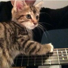 """""""Graham is a little rockstar"""" Ed is so proud of that darn little cat and it is the cutest thing ever."""