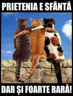 I love poetry and I love cats. Many poets have written about our feline friends and some are presented here in traditional and contemporary verse. I Love Cats, Cute Cats, Funny Cats, Funny Animals, Cute Animals, Crazy Cat Lady, Crazy Cats, Here Kitty Kitty, Cool Pets
