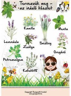 Tervezzük meg - induló készlet - gazigazito.hu Herb Garden, Vegetable Garden, Garden Plants, Home And Garden, Back Garden Landscaping, Natural Life, Back Gardens, Earth Day, Garden Planning