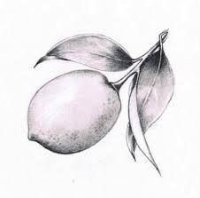 Image result for black and white italian lemon tree illustrations