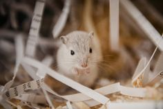 Caring for your gerbil (Blue Cross)