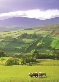 The pillowy hills of Glenelly Valley, County Tyrone.