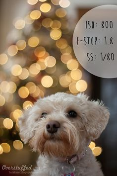 holiday photography How to achieve Christmas Light bokeh in the background of a photo