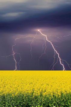 Canola Crop Lightning by Steve Ryan