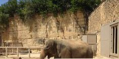 RELEASE LUCKY THE AGEING ELEPHANT TO A SANCTUARY
