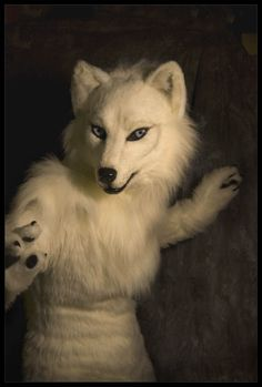 One day I'll Own my own fursuit! <3 and then go fursuiting! :D