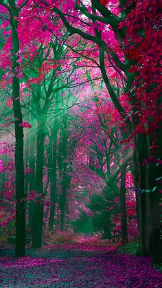 tree image by Luis Bauitsta. Discover all images by Luis Bauitsta. Find more awesome forest images on PicsArt. All Nature, Amazing Nature, Pink Nature, Autumn Nature, Nature Study, Autumn Fall, Beautiful World, Beautiful Images, Autumn Forest
