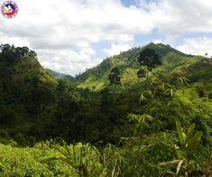 Jungle Valley in Mindanao, Philippines       ☎ Contact us: 0203 515 0803       #philippines #mindanao #junglevalley #nature #mostvisited #travelphilippines #mabuhaytravel #flightstophilippines #cheapflights #cheapflightstophilippines #travelagentsinuk