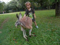 Make it happen! Work In Australia, Kangaroo, Wildlife, Animals, Baby Bjorn, Animales, Animaux, Animal, Animais