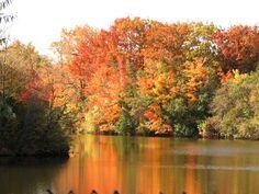 CREDO EXPERTO: Proč se na podzim barví listy? Beethoven Symphony ... Symphony No 9, River, Mountains, Nature, Outdoor, News, Outdoors, Naturaleza, Outdoor Games