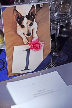 Incorporating pets in table numbers by Joan Love Events