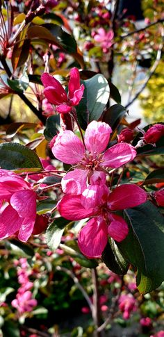 Spring, Plants, Beautiful, Flowers, Tree Structure, Garten, Planters, Plant, Planting