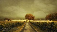 Through the Vineyard | by larsvandegoor.com