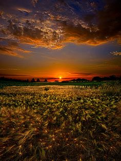 """""""When Time Stood Still""""  Horizons by Phil Koch  A two year journey through the landscapes of Wisconsin."""