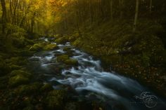 """Autumnal Legend - """"He found himself wondering at times, especially in the autumn, about the wild lands, and strange visions of mountains that he had never seen came into his dreams.""""  A shot from my last trip in the mountains.  For Capture this shot i have used Lucroit Equipment, if you are interested don't foget that you can get 10%OFF with my Discount Code FOSSATI10. http://lucroit.com/SHOP/?&id_lang=1 WORKSHOP ANNOUNCEMENT: Want to join me on an adventure here? I'll be co-leading a…"""