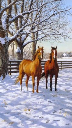 'Coffee and Chocolate in the Morning' by Persis Clayton Weirs adorables funny graciosos hermosos salvajes tatuajes animales Cute Horses, Pretty Horses, Horse Love, Beautiful Horses, Painted Horses, Horse Drawings, Animal Drawings, Farm Animals, Animals And Pets