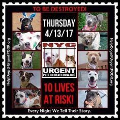 Urgent Death Row Dog (@UrgentPart2) | Twitter
