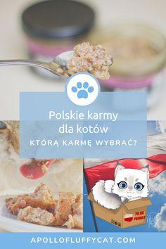Które polskie karmy są najlepsze dla Twojego kota? Poznaj moje recenzje, efekty testów i dowiedz się, które polskie karmy dla kotów są według nas warte Twojej uwagi! Karma, Breakfast, Blog, Morning Coffee, Blogging