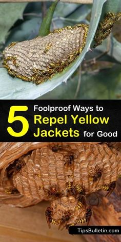 Learn about the easiest and most effective ways to repel yellow jackets for good. These homemade attractants and wasp traps help you avoid the stingers from paper wasps, yellow jackets, and honey bees that are popular during late summer. #repel #yellowjackets #wasps Wasp Deterrent, Insect Repellent, Natural Bee Repellent, Yellow Jacket Trap, Yellow Jackets, Homemade Wasp Trap, Hornet Trap, Ant Killer Recipe, Wasp Killer