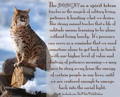 Your Animal Spirit Guide for May is The Bobcat – Witches Of The Craft® Animal Meanings, Animal Symbolism, Animal Spirit Guides, Your Spirit Animal, Power Animal, Animal Magic, Strongest Animal, Spiritual Animal, Animal Medicine