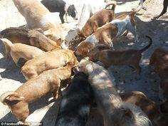 Θεόκλητος Προεστάκης: O Κρητικός οδοντίατρος που φροντίζει 200 αδέσποτα σκυλιά, τα οποία βρίσκει σχεδόν ετοιμοθάνατα! (photo Stuffed Mushrooms, Photo And Video, Dogs, Animals, Image, Stuff Mushrooms, Animales, Animaux, Pet Dogs