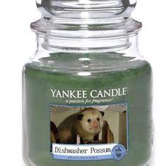 odeur de Vince
