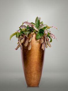 Inspiratie interieurbeplanting en kunstplanten - Oasegroen Moscow Mule Mugs, Indoor Plants, Beautiful Flowers, Floral Design, Succulents, Plant Stands, Tableware, Graphics, Interiors