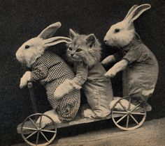Vintage Dressed Bunnies and Kitten on Scooter