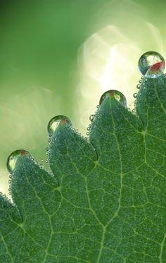 #drop, #bokeh, flare, leaf texture