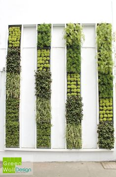 i like the cleanliness and different shades. very palm springsy to me? Vertical Vegetable Gardens, Indoor Vegetable Gardening, Vertical Farming, Landscape Walls, Garden Landscape Design, Green Architecture, Landscape Architecture, Vertikal Garden, Vertical Green Wall