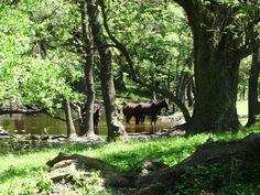 Danube Delta Wildlife Watching - The Adventures of Kiara Yew Danube Delta, Romania Travel, Amazing Sunsets, Bird Species, During The Summer, Best Cities, Bird Watching, Where To Go, Rivers
