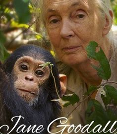 Jane Goddall & friend. An incredible women who in her very early 20's went off to Africa to study chimpanzees. Undaunted and unafraid, I've always been a huge admirer. My education was based on the same things she studied, because as a women-you can do anything you want-if you're not afraid to do so.