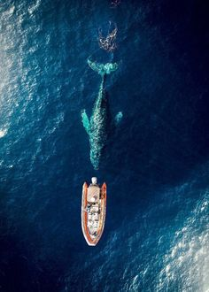 """The whale is swimming directly underneath us!"""" - Balboa Peninsula, Newport Beach 🙌😎🚁💨 Courtesy of Drones, Image Beautiful, A Whole New World, Jolie Photo, Birds Eye View, Aerial Photography, Photography Ideas, Wanderlust Travel, Marine Life"""
