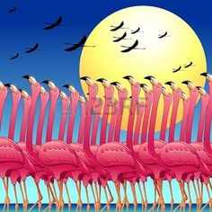 Pink Flamingos Dance on the Sun Stock Photo - 19243530