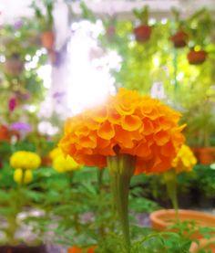 Vasos de flores de um orquidário