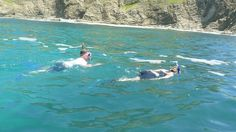 You will love snorkeling in the Carribbean ocean in Cahuita National Park in Costa Rica.