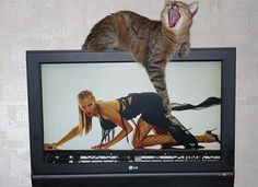 funny-perfectly-timed-cat-photo-58__605