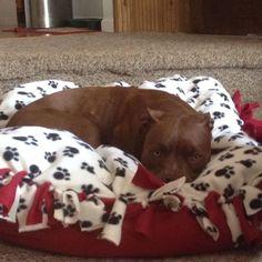 DIY dog beds