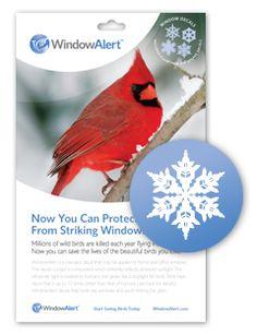 Window Alert Butterfly Decals By Window Alert Httpwwwamazon - Window alert hummingbird decals amazon