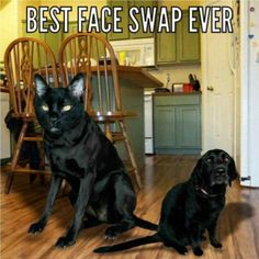 Best face swap ever!