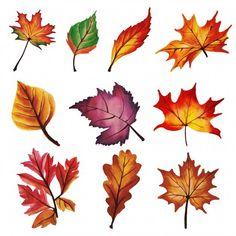 Discover thousands of free-copyright vectors on Freepik Autumn Art, Autumn Leaves, Watercolor Leaves, Watercolor Paintings, Fall Leaf Template, Colored Pencil Techniques, Leaf Coloring, Flower Doodles, Color Pencil Art