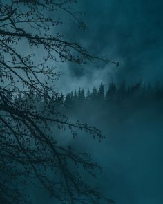 Breathtaking Moody and Mysterious Forest Photography by Dylan Furst - Ausdrucksvielfalt - Nature travel Dark Green Aesthetic, Nature Aesthetic, Forest Photography, Landscape Photography, Mysterious Photography, Ocean Photography, Lifestyle Photography, Photography Tips, Video X