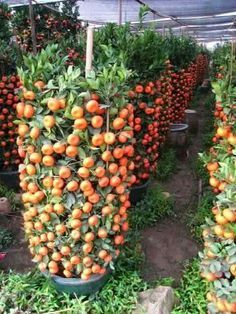 Irresistible What Is Hydroponic Gardening Ideas. Glorious What Is Hydroponic Gardening Ideas. Vegetable Garden For Beginners, Starting A Vegetable Garden, Backyard Vegetable Gardens, Veg Garden, Vegetable Garden Design, Fruit Garden, Edible Garden, Gardening For Beginners, Gardening Tips