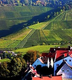 Stuttgart, Germany✔️ these vineyards have been here since the Roman Times..my middle school was down this road