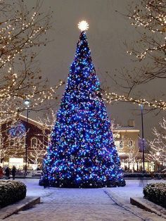 A very large Christmas tree stands so tall! Mainly covered in dark blue Christmas lights. Clear lights light up in the background. Christmas Scenes, Noel Christmas, Outdoor Christmas, Christmas Photos, Winter Christmas, Winter Snow, Christmas Displays, Christmas Mantles, Winter Blue