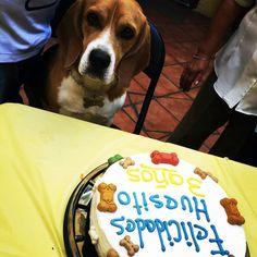 #PastelesParaPerrosDF #Coyoacán #LukasCakes #fiesta #perro #festejo #dog #mejoramigo