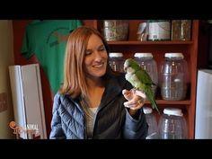 Quaker Parrots as Pets - Facts You Should Know   HubPages