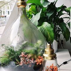 The ultimate Christmas presents are these sustainable worlds by Spruitje. Pickles and Big Brother are available at all our shops. Bottle Garden, Bottle Plant, Terrarium Scene, Plants In Bottles, Christmas Presents, Pickles, Sustainability, Glass Vase, Table Decorations