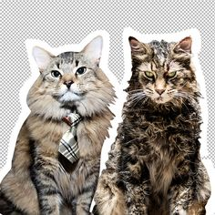 'Pet Sematary' Groomer & Trainers Discuss Church the Cat Funny Animal Videos, Animal Memes, Cat Tie, Calming Cat, Tiny Cats, Pet Sematary, Cat Makeup, Cartoon Background, Animal Sketches