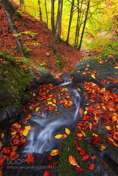 Autumn in forest by syounesi1214